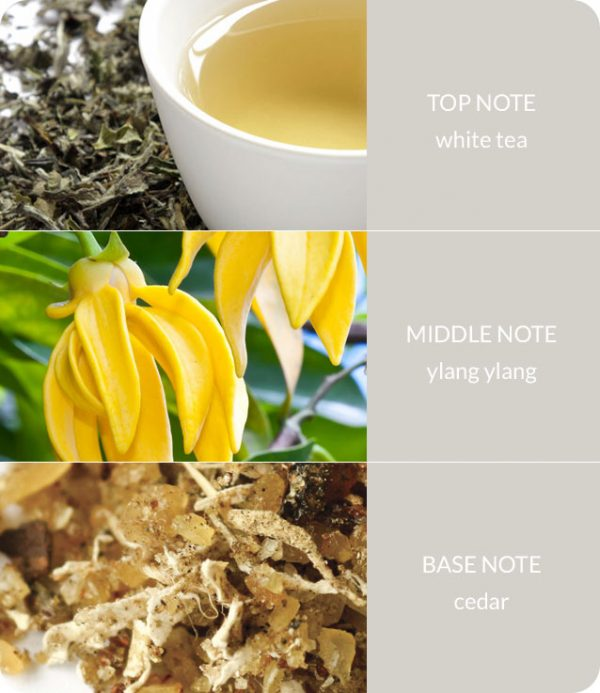white-tea-notes